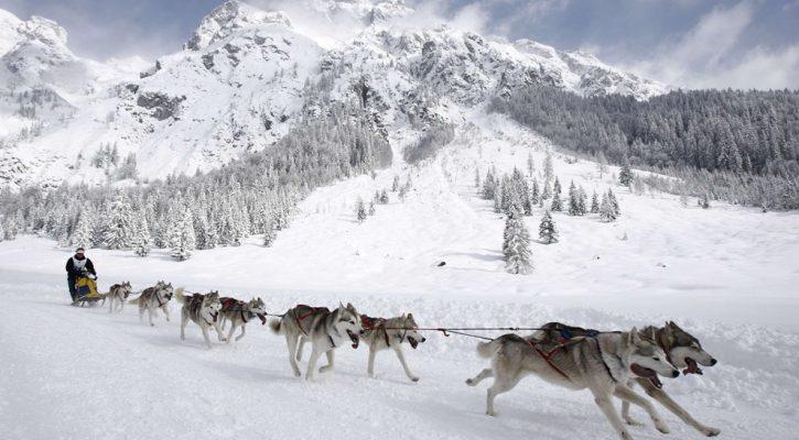 Mushing activiteiten non-ski